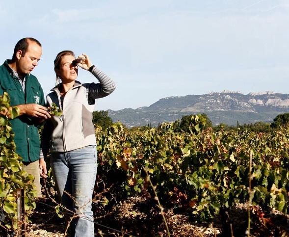 wijnboeren-dijkman-familie