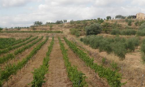 wijnboeren-persoon-gaard